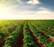 Immagine associata al documento: Sicurezza alimentare e agricoltura sostenibile