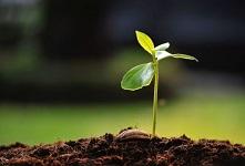 Immagine associata al documento: Scheda V Avviso Microcredito/MicroPrestito d'impresa